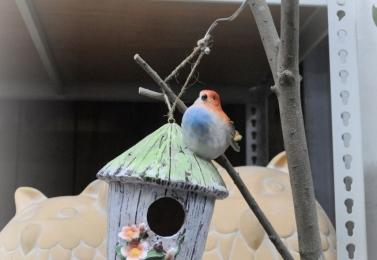 鳥屋餵鳥器 19D0026